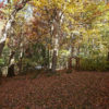 16975 Jackson Trail, Lakeville, MN 55044 (4)