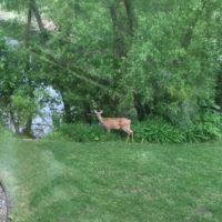 1291 Spring Green Lane, Burnsville, MN 55306